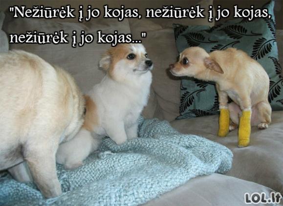 Nesveikas šunėkas
