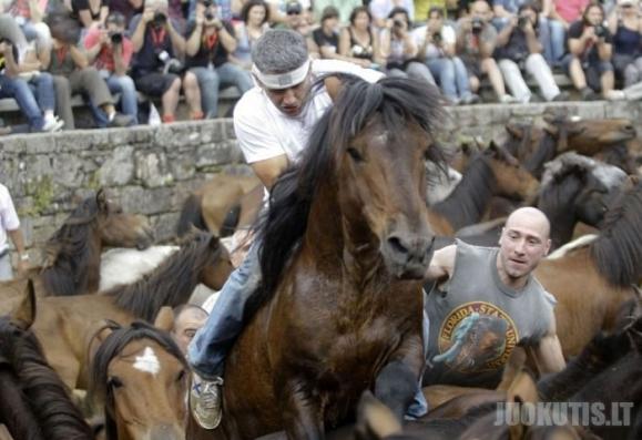 Festivalis Rapa Das Bestas