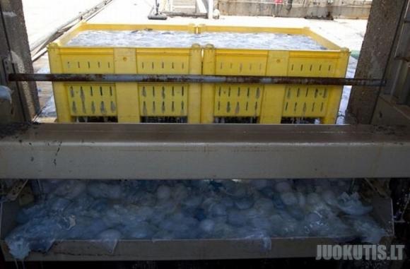 Izraelio elektrinė uždaryta, dėl medūzų
