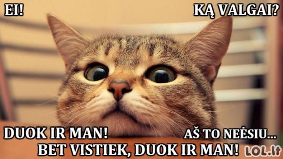 Naivuolis katiniukas
