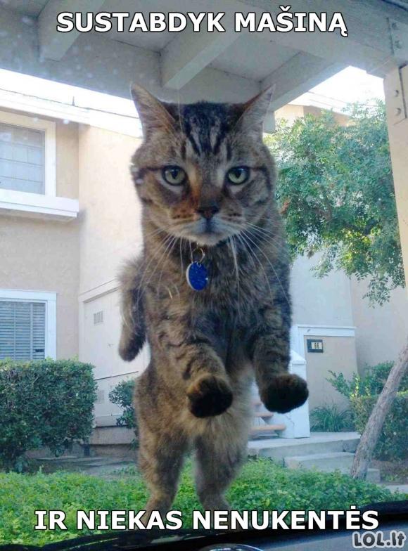 Kai katinas serga priklausomybe nuo Whiskas