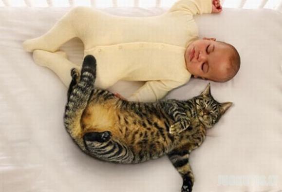 Miegojimas su gyvūnais