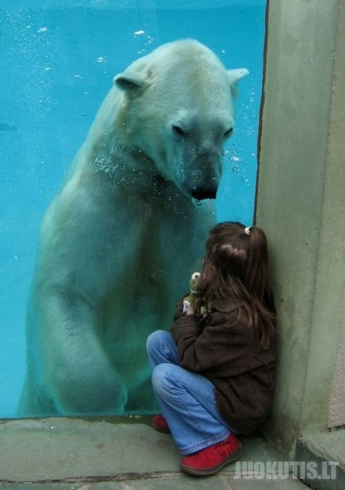 Gyvūnai, stiklas, vaikai