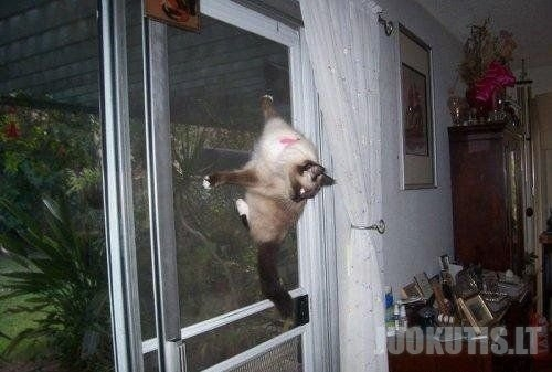 Juokingos katės