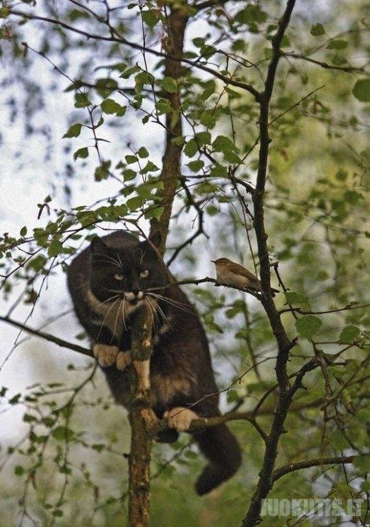 Katukai ir paukštukai