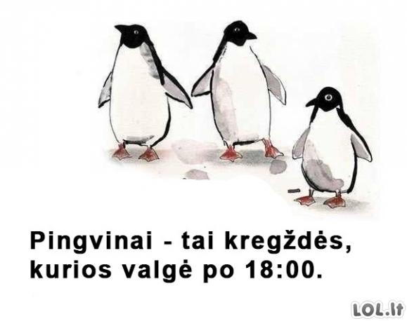 Legenda apie pingvinus