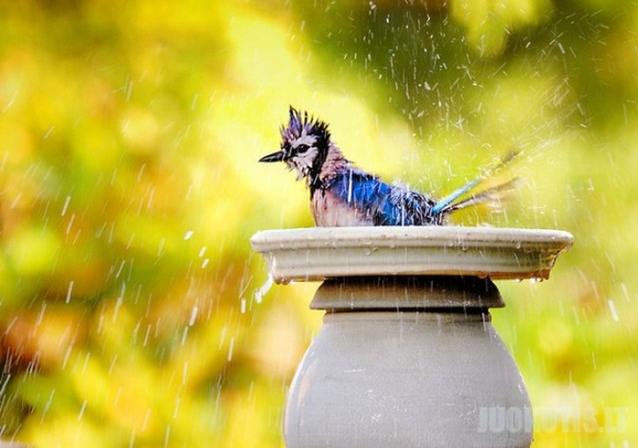 Malonus šiltas lietus