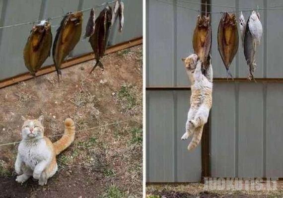 Katiniška kasdienybė