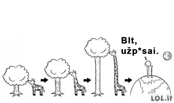 Evoliucijos priežastis