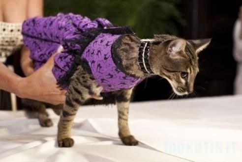 Kačių mados