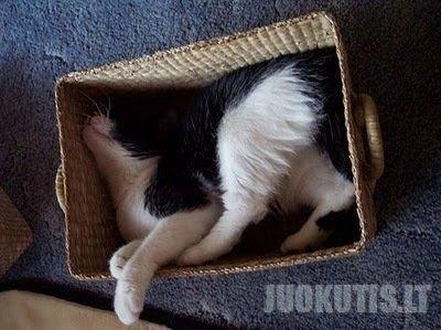 Katės, kurios mėgsta miegoti dėžėse.