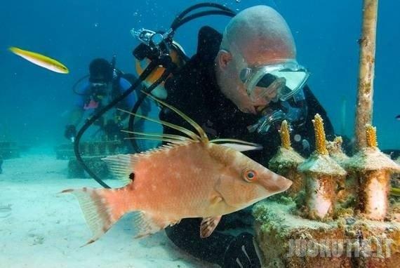 Kaip auginami koralai