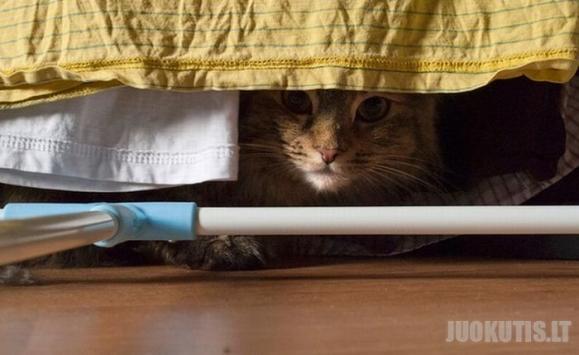 Šnipinėjančios katės