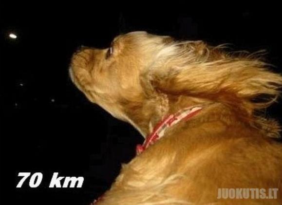 Šuo ir automobilių langai