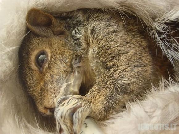 Voverės