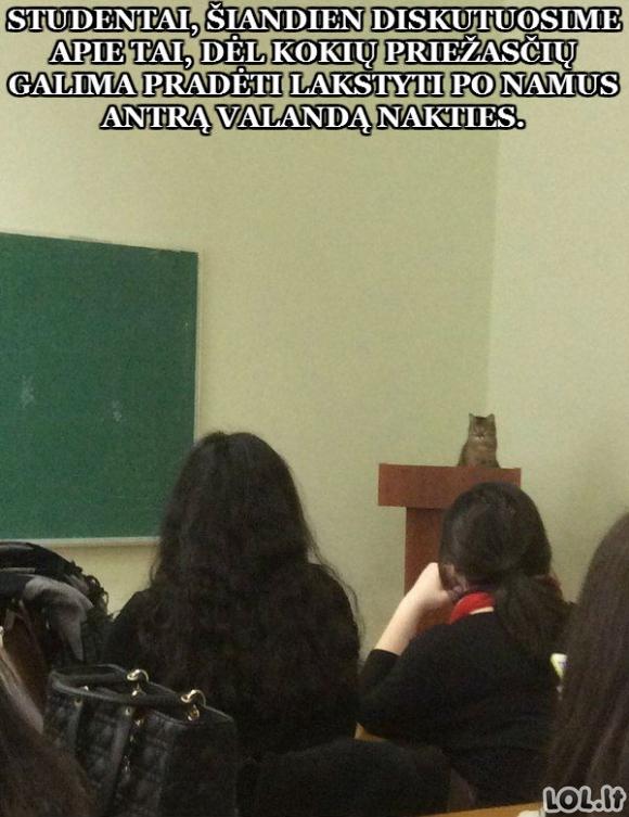 Jei būtų kačių universitetas