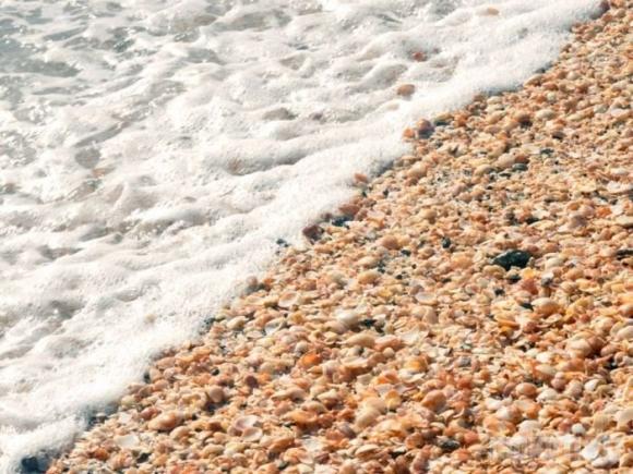 Paplūdimys iš kriauklių