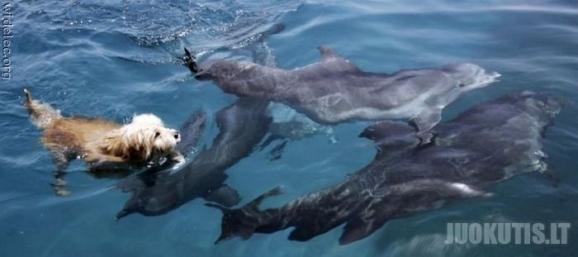 Gyvūnų draugystė
