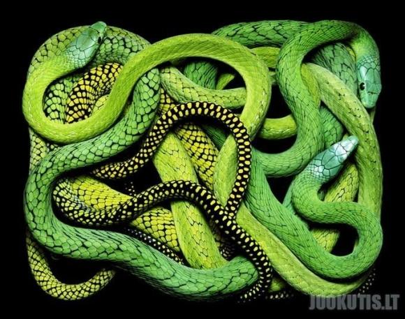 Gyvatės
