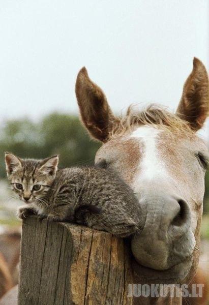 Juokingos gyvūnų nuotraukos