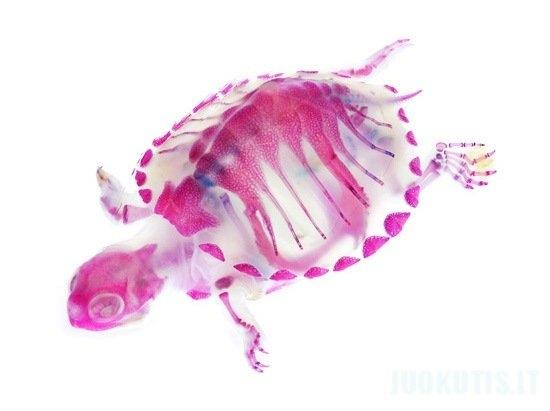 Jūros būtybių anatomija