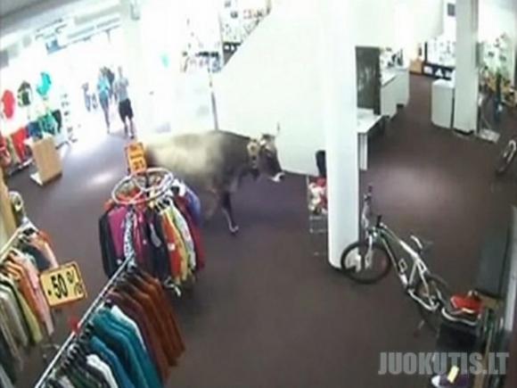 Karvė atėjo apsipirkti į parduotuvę