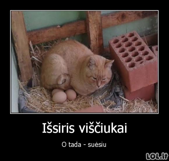 Kantriausias katinas