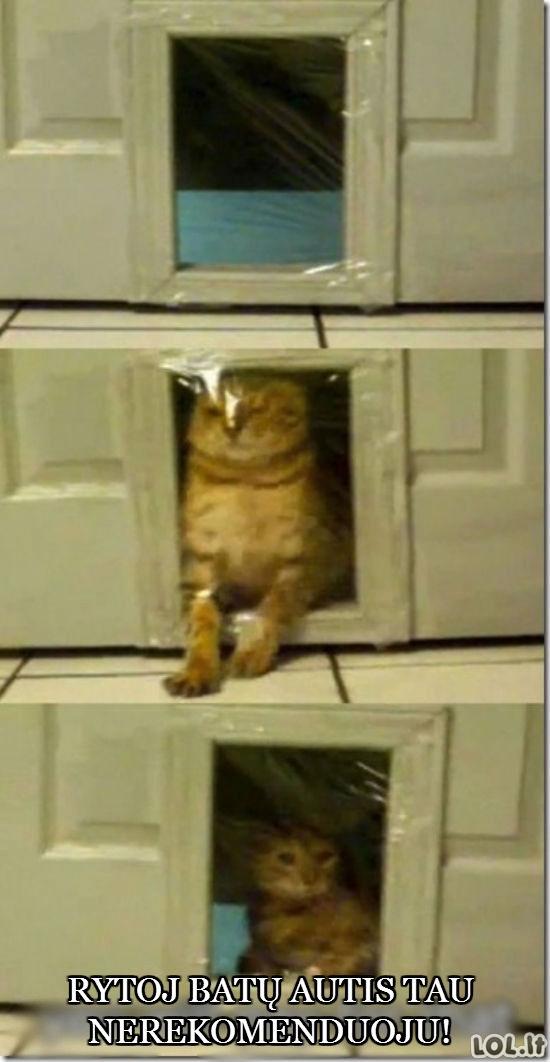Kaip supykdyti katiną