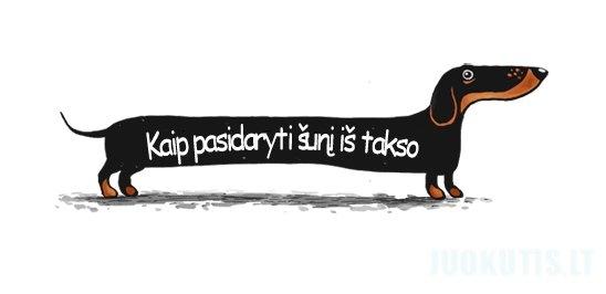 Kaip pasidaryti šunį iš takso