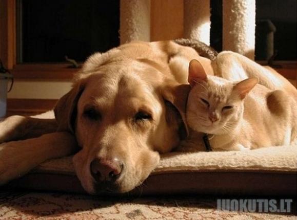 Katės ir šunys