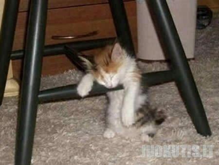 Miegantys gyvūnai