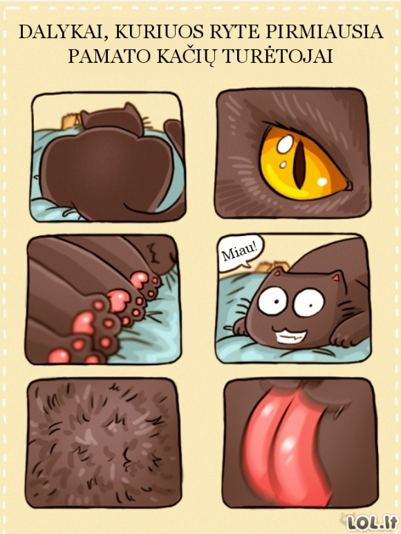 Ką rytais pirmiausia pamato kačių turėtojai?