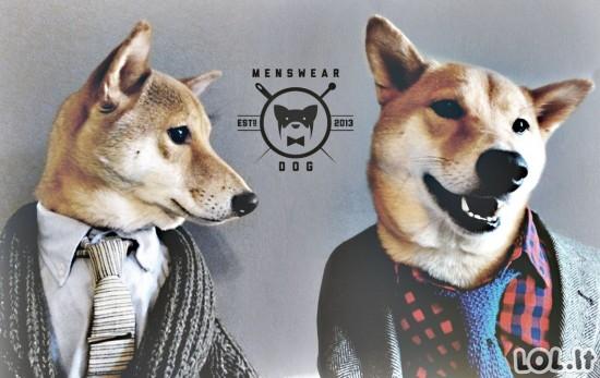 Stilingiausias šuo pasaulyje