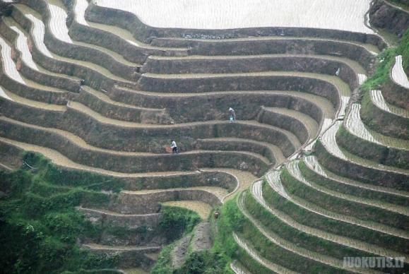 Nepakartojamos ryžių terasos