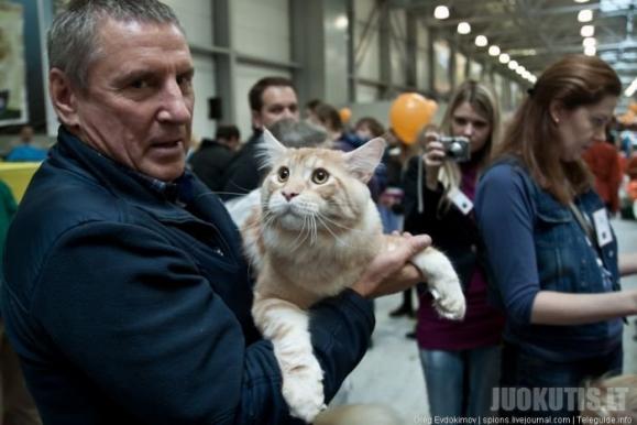 Kačių paroda