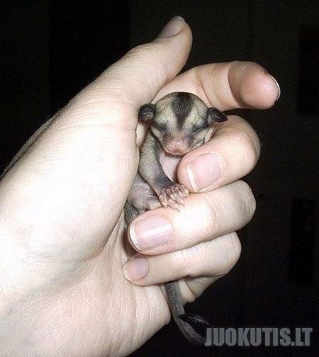 Miniatiūrinių gyvūnų pasaulyje