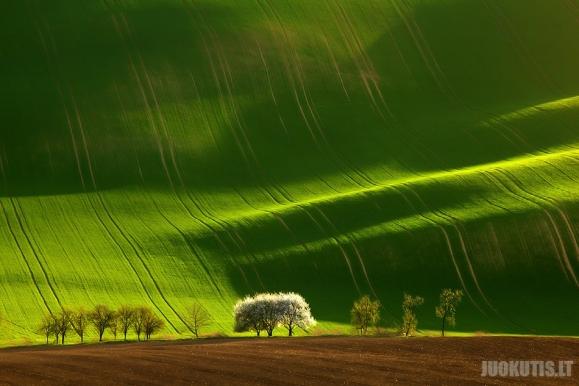 Nuostabūs žali laukai