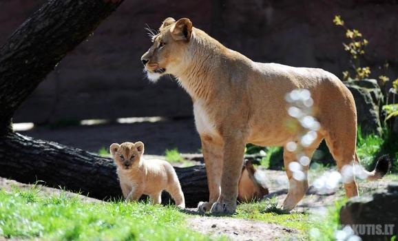 Gyvūnai ir jų vaikai