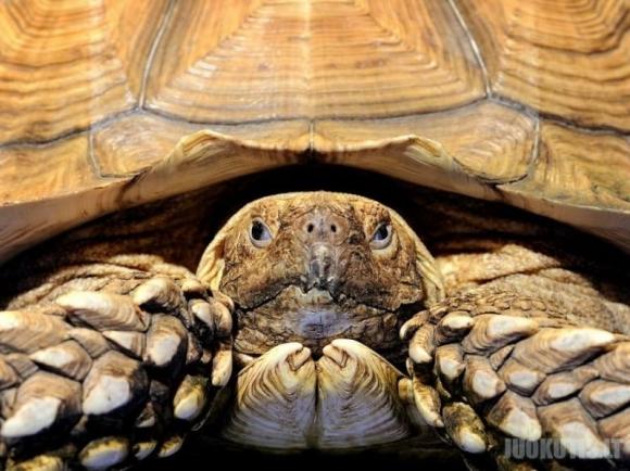 Geriausios National Geographic rugsėjo nuotraukos