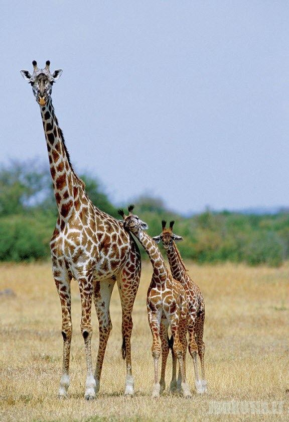 Motinos laukinėje gamtoje