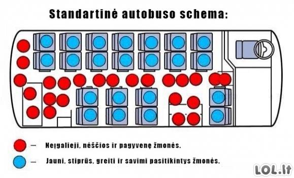 Autobuso schema