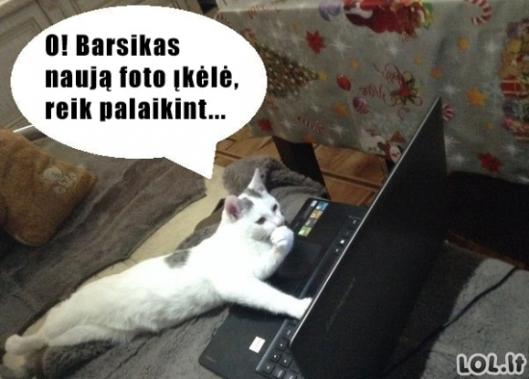 Šiuolaikiškas katinas