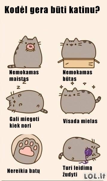 Afigienas katino gyvenimas