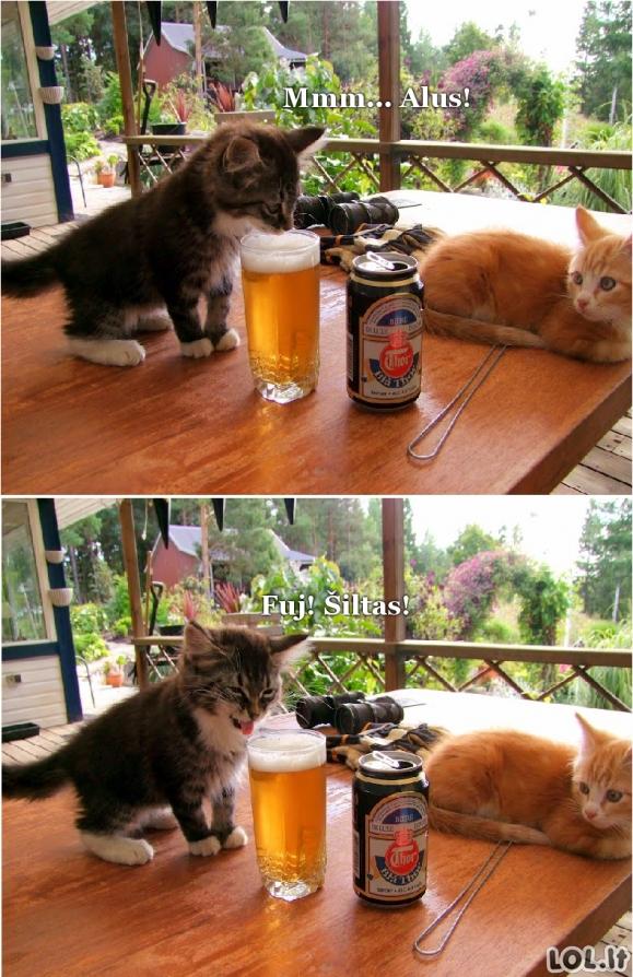 Kai gurkšteli šilto alaus