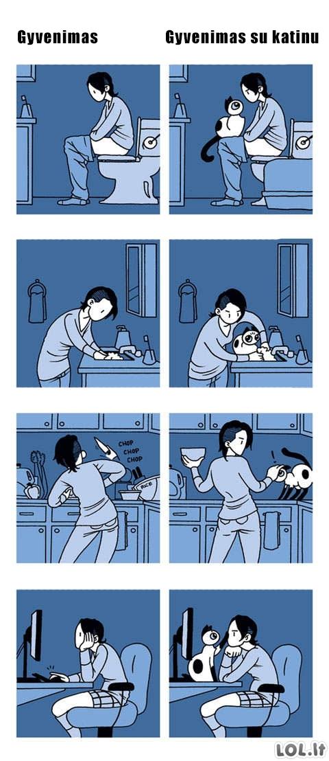 Gyvenimas su katinu
