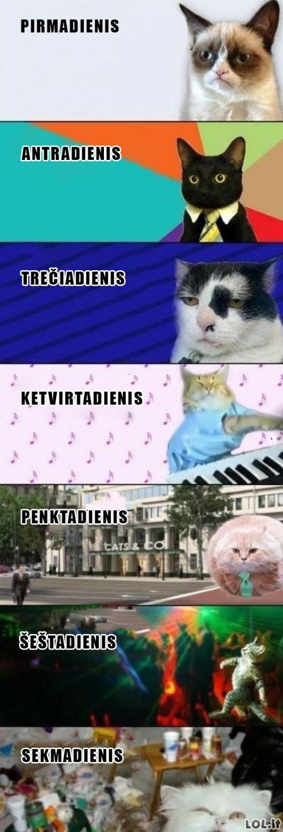 Katino nuotaika pagal savaitės dieną