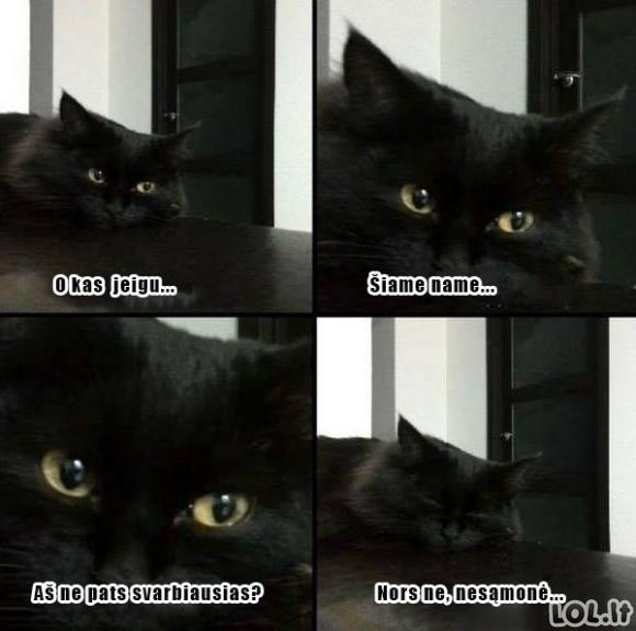 Katino pamąstymai