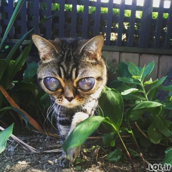 Katė su ateivio akimis