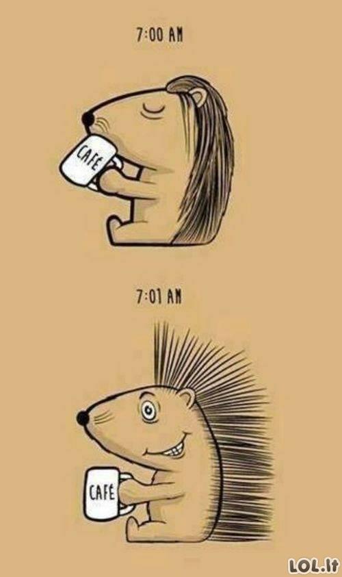 Kavutės galia