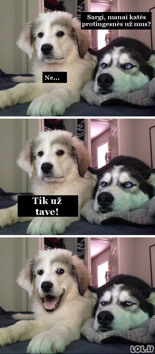 Šuniukas bajeristas